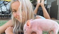 Veganka ukradla v Austrálii šest selat, prý je chtěla zachránit. Soud jí uložil veřejné práce