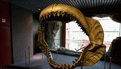 Vědci spočítali délku prehistorického žraloka megalodona