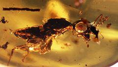 Ostravští vědci objevili v jantaru neuvěřitelně zachovalý hmyz z éry dinosaurů