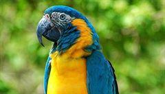 Papoušci chápou charitu. I ptáci se dokáží dělit