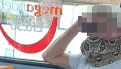 Roušku v MHD nelze nahradit živým hadem, upozornil po incidentu dopravní podnik v Manchesteru