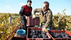 Spotřební daň z vína už za dva roky? Vinaři pláčou, pivovary se radují