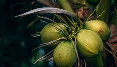 Z úspěšného manažera milovníkem kokosu. Je to superpotravina plná vlákniny, říká