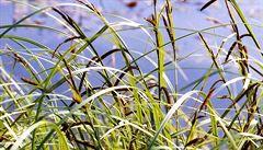 Vědci zkoumali, jak se rostliny chystají na rychlý jarní start