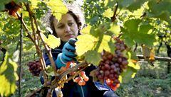 Vinařstvím roku 2020 se stal Sonberk z Břeclavska, cenu vyhrál už podruhé