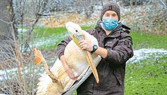 Zoologické zahrady musí opět zavřít. Mají přitom rozsáhlé venkovní areály a v zimě žádné davy nechodí
