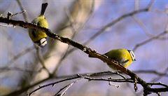 Vědci zkoumají vliv šetrného hospodaření na ptactvo v Praze a v okolí