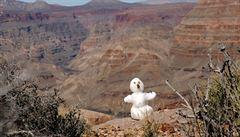 V mrazivých roklích Grand Canyonu: v zimě má na raftech úplně jiné kouzlo