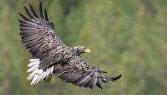 Vědci letos v NP Podyjí napočítali nejvíce druhů vodních ptáků