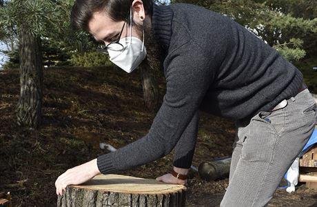 Vědci z brněnské univerzity prozkoumají dřevo ze stromů z města