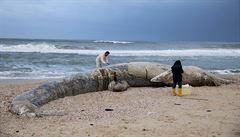 Ekologická katastrofa v Izraeli. Desítky kilometrů pobřeží zamořila ropa z neznámého plavidla