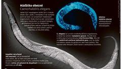 Slepí červi vnímají barvy. Vymyká se to všemu, co vědci znají