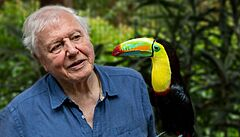 Neuvěřitelná pestrost zvířat. Přírodovědec Attenborough zažene covidové deprese všemi barvami