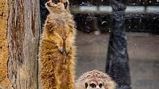 Chceme příznivcům nabídnout pohled na to, co v zoo nemohli vidět, říká ředitel Bobek k nové publikaci