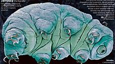 Želvušky přežijí i vystřelení. Zvládly by i cestu do vesmíru a přistání na povrchu cizího vesmírného tělesa?