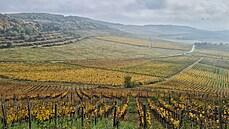 Připravit sklenice, láhve a notebook. Jak probíhá virtuální degustace maďarských vín?