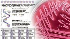 Vědci vytvořili E. T. bakterie. Lidstvu se tak otevírá naděje na nové léky