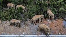 Stádo slonů opustilo rezervaci a přišlo k čínskému velkoměstu. Urazilo při tom 500 kilometrů