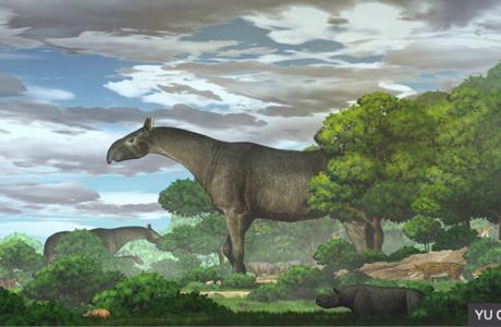 Čínští vědci objevili starodávného obřího nosorožce. Byl vyšší než žirafa a těžký jako čtyři sloni