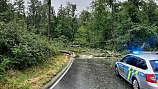 Tragická nehoda u Čížové se nemusela stát. Vůz neměl zastavovat blízko stromů, říká mluvčí BESIPu