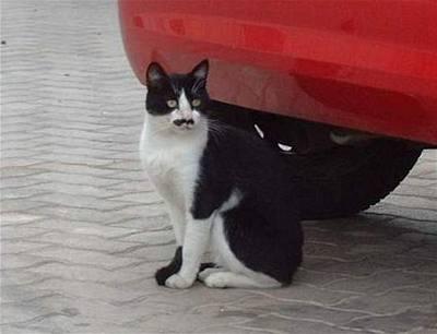 Horké černé ghetto kočička