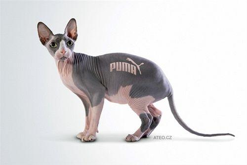 Značková kočka (© aTeo) http://ateo.cz