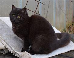Čistě černá kočička obrázky