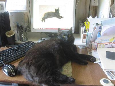 Velká kořist tlustá kočička fotky