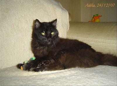 černá kočička bouchl